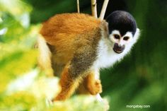 Top 10 List of Exotic Pets