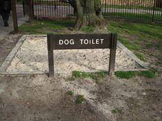 indoor dog parks - Google Search