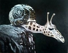 Animals Mashup : Photos manipulation
