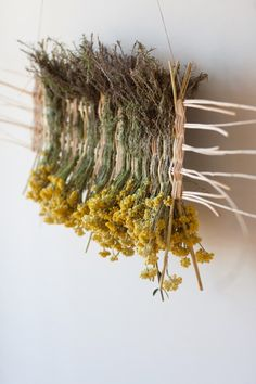 Weaving by Monica Guilera work in progress Sempreviva (Helichrysum stoechas) Olive and Willow May Ports i Mans. Weaving by Monica Guilera work in progress Sempreviva (Helichrysum stoechas) Olive and Willow May Ports i Mans. Weaving Projects, Weaving Art, Loom Weaving, Tapestry Weaving, Weaving Textiles, Willow Weaving, Basket Weaving, Deco Champetre, Deco Nature