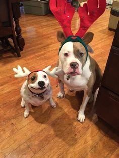 Diese Hilfs-Weihnachtsmänner:   22 Hunde, die ein kleines bisschen seltsam sind