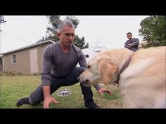 Cesar Millan is a self-taught & worldwide known dog behaviorist. His website includes topics from puppy training, understanding dog aggression & dog shop.