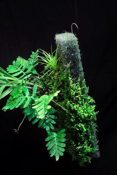 Epiweb moss