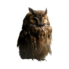 owl 12.png ❤ liked on Polyvore featuring animals, birds, owl, fillers and fall