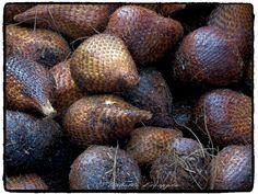 INDONESIE - Fruit Salak Site - http://indonesie.eklablog.com Page Facebook - https://www.facebook.com/pages/Indon%C3%A9sie-par-Isabelle-Escapade/269389553212236?ref=hl