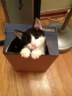 Can I have what's in here? Please!
