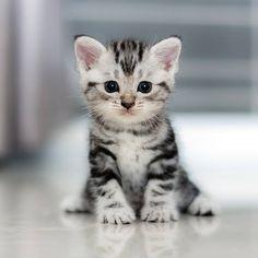 La to do list avant d'accueillir un chaton