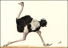 Ostrich Run Bird Africa Animal 8x5 Original Art Watercolor Painting Juan Bosco | eBay