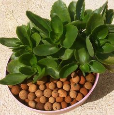 www.trellishorticulture.com/other-media.php - Exporters & Suppliers of Clay Pebbles. Clay pebbles are light to dark brown balls which is a great growing medium for plants. Clay pebbles are small particles of burnt clay.