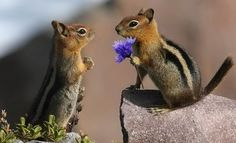 For me?? You shouldn't have! http://pandawhale.com/convo/8506/chipmunks-courting