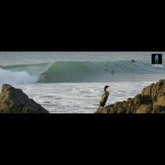 Nuestros trips en Surforo.cl #surftrips #chile #buchupureo #surforo