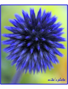 Blue flower ball. by vienna1931, via Flickr