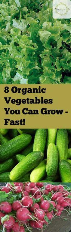 8 Organic Vegetables You Can Grow Fast | Bless My Weeds