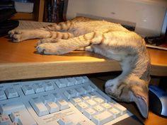 Koty i klawiatury