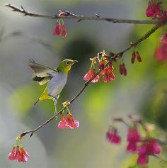 #675 小綠晨舞 Morning Dancing! | Flickr - Photo Sharing!