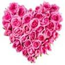 Order online heart shape pink rose and get free home delivery to Hyderabad. Assured door step gifts delivery to Hyderabad without any delivery charges. Visit our site : www.flowersgiftshyderabad.com/Valentines-Gifts-to-Hyderabad.php