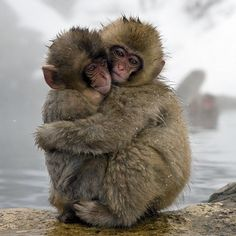 Our most liked photo of 2013 was…. Japanese macaque babies huddling together, as seen in One Life on Nat Geo Wild