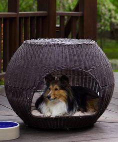Indoor-Outdoor Igloo