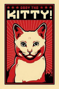 Obey the Kitty! White Cat Posters> White Cat> Obey the Pure breed - Coupons Crazy Cat Lady, Crazy Cats, I Love Cats, Cool Cats, Cat Posters, Funny Posters, Here Kitty Kitty, Sleepy Kitty, Kitty Cats