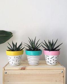 Keyifli Pazarlar🌈🌿🌱🍃 ••••••••••••••••••••• Sunday mood🌈🌿🌱🍃 . . . . . . . #cactus #cacti #cactuspot #cactilove #cactipots #cactusmagazine…