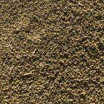 Coriander Seeds, How To Dry Basil, Vegetarian, Herbs, Herb, Medicinal Plants