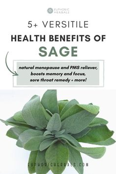 Sage has several versatile health and skin benefits when used as a medicinal plant / herb. From being a natural menopause and PMS reliever, boosting memory and focus, being a natural sore throat remedy, to being a great addition in natural skin care for certain skin issues like eczema and acne, the benefits of sage are many. Read this post from Euphoric Herbals to discover even more benefits and uses of Sage as a medicinal plant / herb and how to use it as a natural remedy (like in herbal… Ayurvedic Herbs, Healing Herbs, Medicinal Plants, Holistic Medicine, Natural Medicine, Herbal Medicine, Holistic Remedies, Herbal Remedies, Herbs For Health