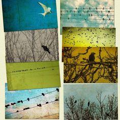 Bird photography, Christmas sale, nature photos, avian art, print collection, bird on a wire, tweet, birdies, black crow - 8 4x6 prints. $35.00, via Etsy.