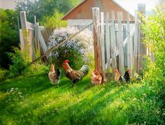 20 paintings, charged by solar energy - Conand Repair Z Photo, Photo Wall, Nature Pictures, Art Pictures, Foto Transfer, Light In, Chicken Art, Red Barns, Modern Artists