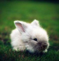 Bunny - stefan-and-bunnies Photo