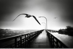 The Messenger  ~Amy, DangRabbit Photography