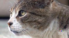 Cat lost in last year's Alberta flood returns http://www.ctvnews.ca/video?clipId=376942&playlistId=1.1855762&binId=1.810401&playlistPageNum=1