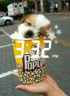 I guess you could say it's 'pup'corn. N Animals, Cute Animals, Pets 3, Aesthetic Pastel Wallpaper, Flora And Fauna, Animal Photography, Cute Puppies, Snapchat, Gw