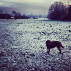 A frosty morning with Margot.