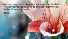 Nature has given to you all some unique potentiality. That is your responsibility to bring it to flowering, to the ultimate growth. OSHO #nature #unique #potentiality #responsibility #bring #flowering #ultimate #growth