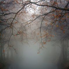 Lovely foggy day in Autumn
