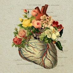 I like the mixture of the anatomy and flowers - Collage Art- I've been working on a similar concept with watercolors, ink, & pressed flowers Love it! Art And Illustration, Medical Illustration, Arte Com Grey's Anatomy, Anatomy Art, Human Anatomy, Collages, Collage Art, Heart Collage, Flower Collage