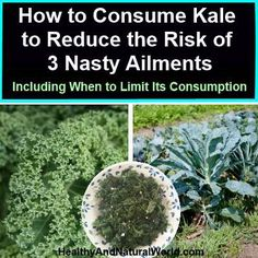 Kale can greatly help lower cholesterol. When kale fibers undergo steaming, they bind to bile acids in the digestive system and help clearing them out. Since the building block of bile acids is cholesterol, the kale's fiber binding helps in cholesterol removal. In this case the liver needs to produce new bile acids from the present cholesterol, and thus the cholesterol levels in the blood go down. Also fresh kale has the ability to lower cholesterol, but not as much as steamed kale.