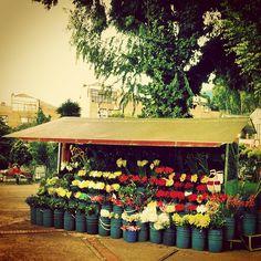 """Flor Dulce Flor @socialmediaweek #InstagramYourCity for Bogotá"" by @shebiuti"