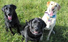 Middletown DE Dog training: Force free dog training services Cecil County MD. Convenient to Kent Co MD, Middletown Bear and Newark DE. Specialize in behavior issues including aggression. Group classes, in home board and train.  Leslie Clifton PMCT CPDT- KA  lookwhaticandodogtraining@gmail.com