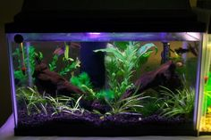 This Photo was uploaded by Nano Aquarium, Tropical Aquarium, Aquarium Ideas, Aquarium Fish Tank, Tropical Fish, Betta Fish Tank, Beta Fish, Fish Fish, Fish Tank Design