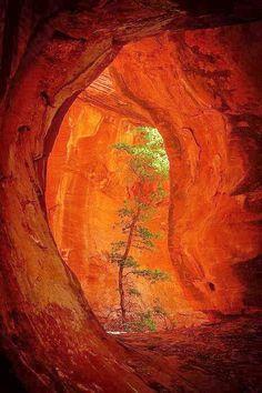 Boynton Canyon,  Sedona, Arizona