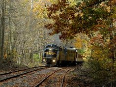 The ride goes through the forest alongside Cheat Mountain. In West Virginia! West Virginia Vacation, Virginia Beach, Virginia Hill, Elkins West Virginia, West Va, Key West, Old Trains, Train Pictures, Camping Places