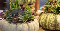 Succulent Pumpkin Workshop with Onita Castillo and Ria Ultsch