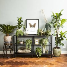These houseplants are amazing! 🤗 📷 by Everydeco Share yours with These houseplants are amazing! 🤗 📷 by Everydeco Share yours with 💚 Room With Plants, House Plants Decor, Plant Rooms, Potted Plants, Indoor Plants, Decoration Plante, Plant Shelves, Interior Plants, Plant Wall