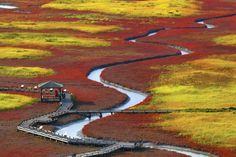 Taepyeong Salt Field have changed more and more in the fall of color. red & yellow carpet in salt botanical garden