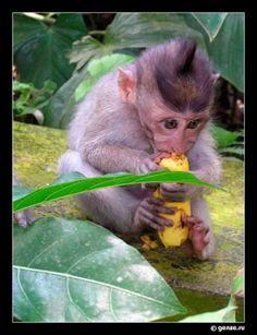 Funny pictures for New year MONKEY. Monkey, Funny Pictures, Fox, Animals, Fanny Pics, Jumpsuit, Animales, Animaux, Funny Pics