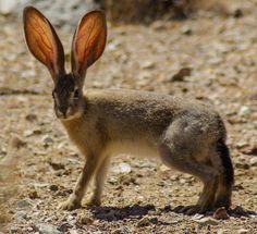 Jack Rabbit Fast Porn