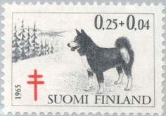 ◇Finland Karelian Bear Dog