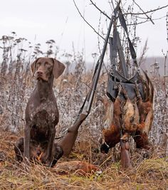 Hunting Dog Names: Name Ideas For Hunting Hounds! Looking for a great name for your hunting hound? Peek at our hunting dog name ideas here! Go Gunner, go! Duck Hunting Dogs, Hunting Dog Names, Hunting Girls, Archery Hunting, Grouse Hunting, Pheasant Hunting, Girl Dog Names, Puppy Names, Dog Names Unique