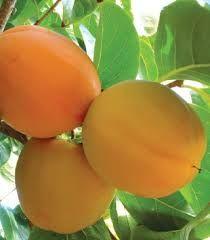 """Résultat de recherche d'images pour """"arvores de bons frutos"""""""